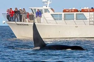 whale watching wildlife tours